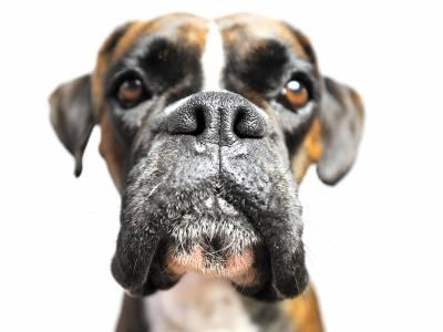 Lingering Pet Odors