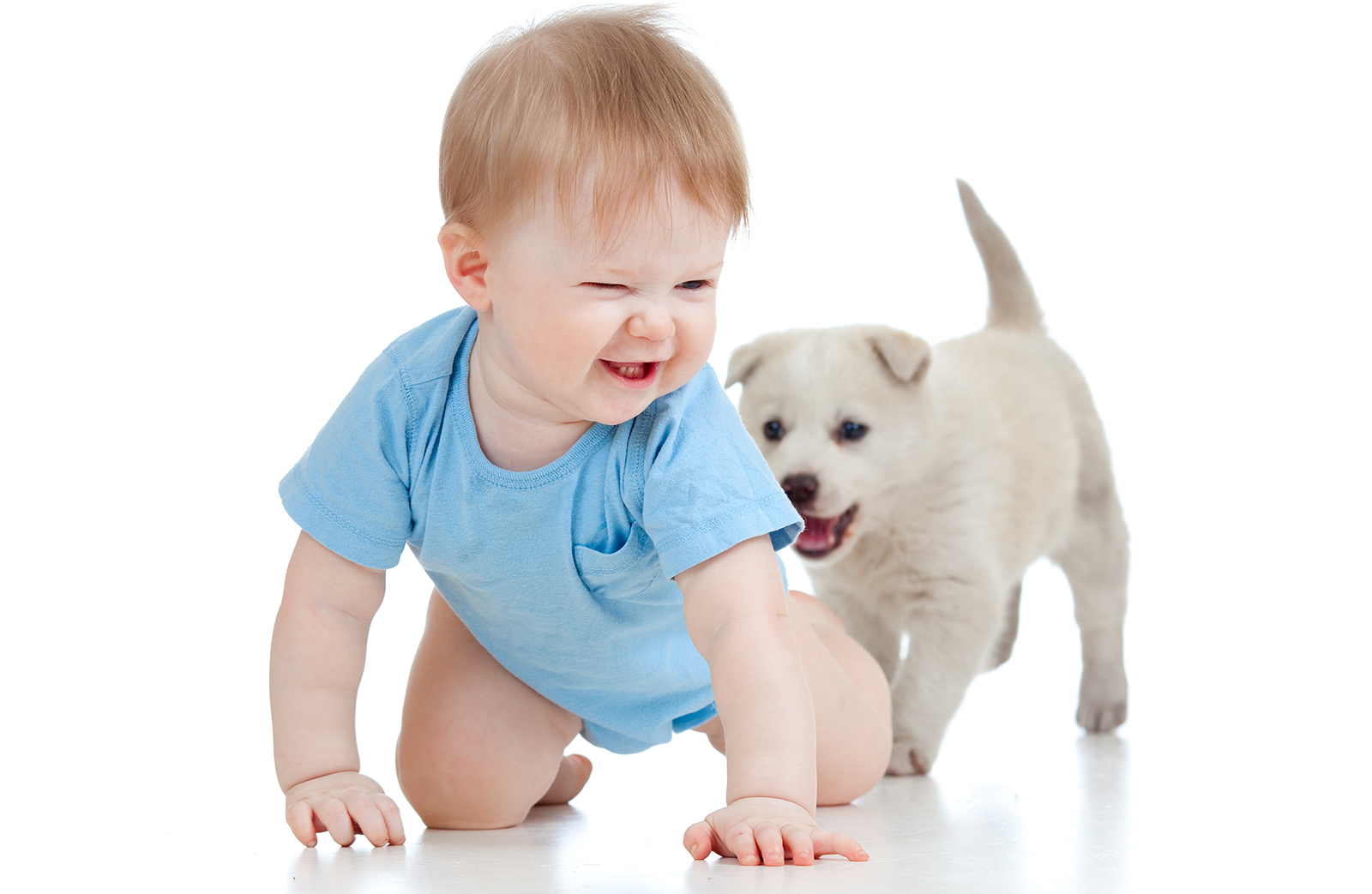 Services for Cleaning Pet Stains Professionally in NJ and PA