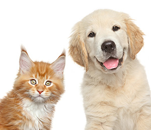 Services for Removing Pet Odors